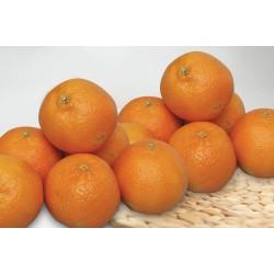 African Mandarin (per kg