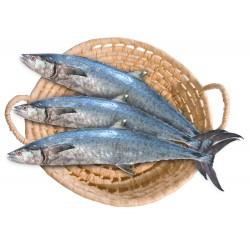 سمك كنعد كبير (للكيلو)